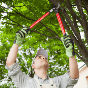 Fall Clean up Tree Trim