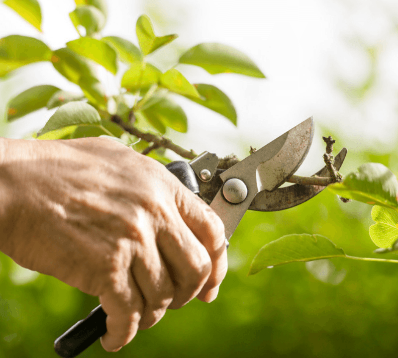 Fall Clean up Pruning