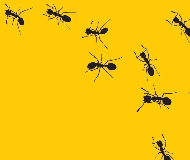 pest control, get rid of ants, Texas