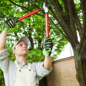protect your Fort Worth Texas home from pests by trimming your shrubs and trees