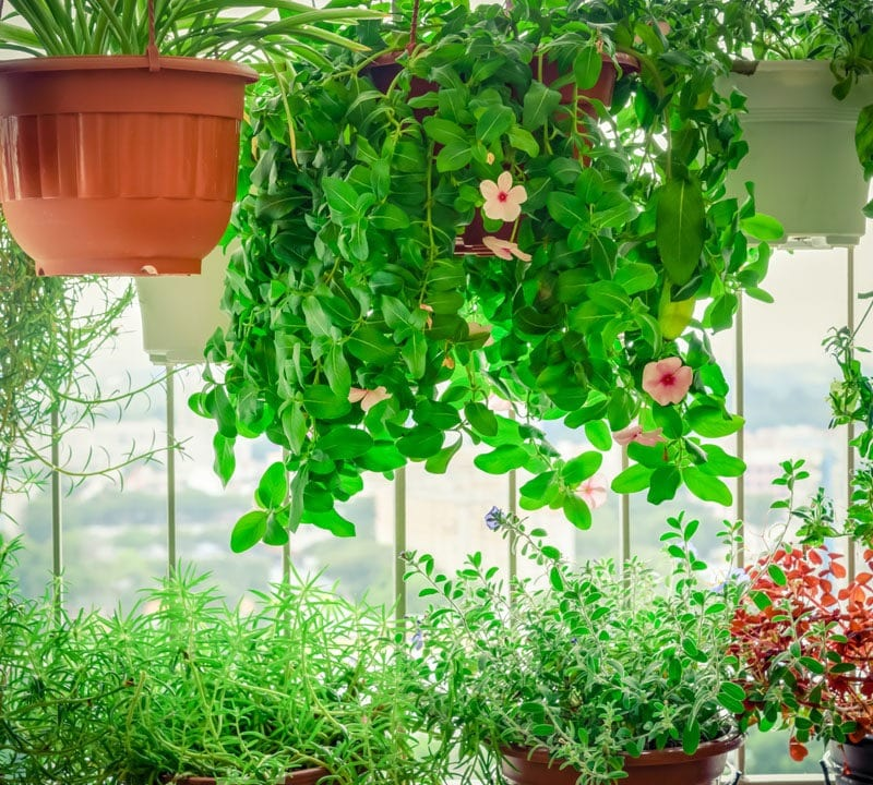 easy to take care of plants