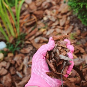 mulch to protect lawn care