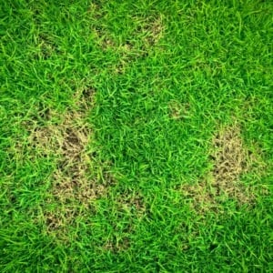 Manage lawn problems by learning to identify the signs in your Arlington Texas lawn