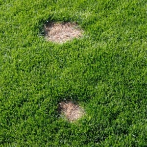 Expert care can help you avoid lawn problems in Flower Mound Texas