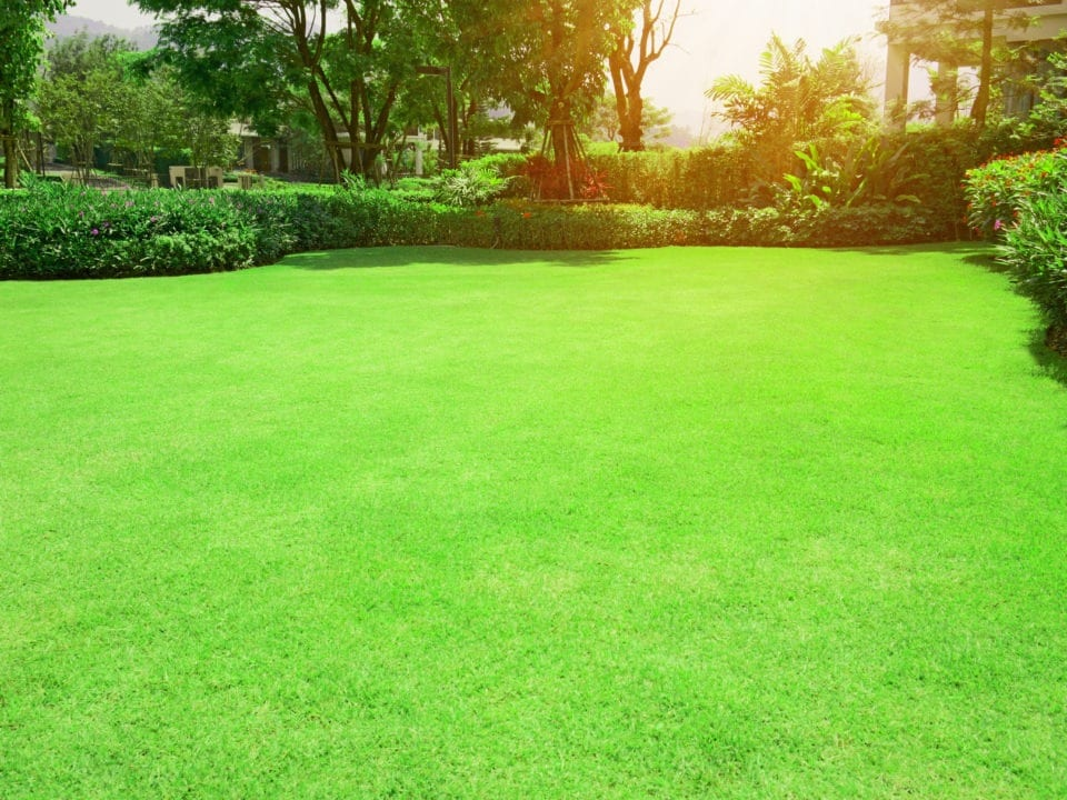 Prevent lawn problems with proper care in Fort Worth Texas