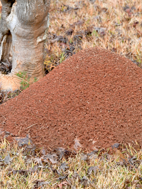 1-Year Fire Ant Prevention