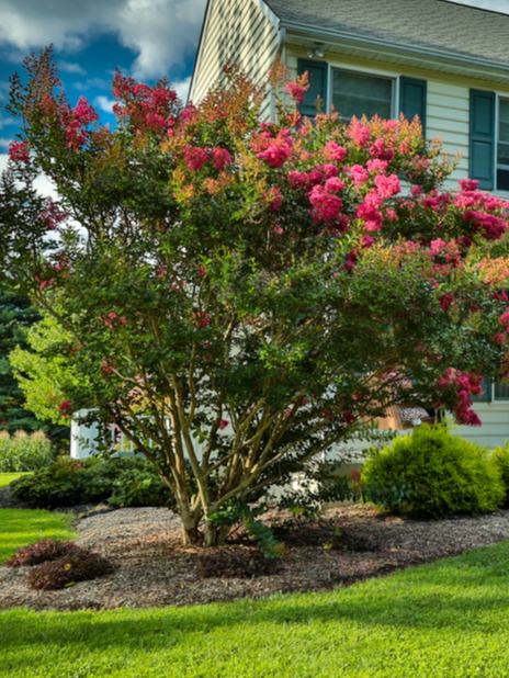 Treat your happy tree with a dose of tree fertilization