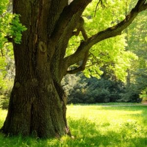 Give your Arlington, TX tree the nutrients it needs with tree fertilization services from Gro Lawn, today.