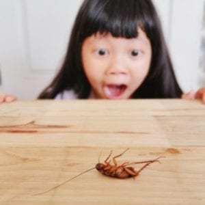 Don't let cockroaches infest your Fort Worth, TX home, invest in pest control services from Gro Lawn.