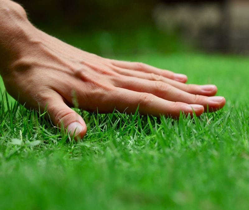 Give your Texas lawn a healthy spring with these spring lawn care tips from Gro Lawn.