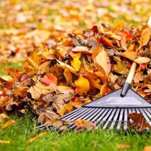 leaves being raked