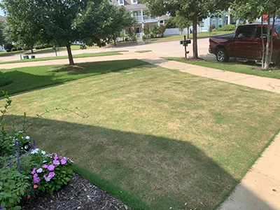 lawn after scalping