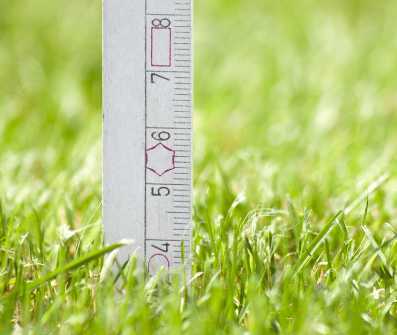 ruler showing grass height