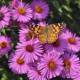 butterfly and bee on flowers